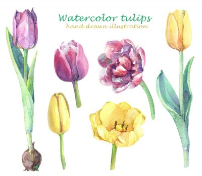 Adesivo Watercolor set of yellow, violet and pink tulips.