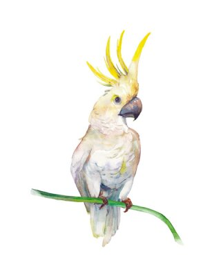 Adesivo Watercolor tropic bird: yellow crested cockatoo. Single parrot on white background. Natural illustration