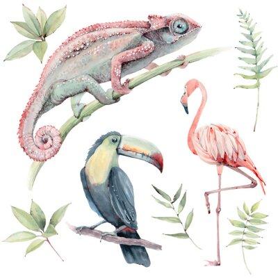 Adesivo watercolor tropical animals set.