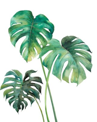 Adesivo Watercolor tropical leaves poster. Hand painted exotic green branches isolated on white background. Summer plants illustration