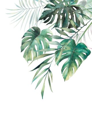 Adesivo Watercolor tropical leaves poster. Hand painted exotic monstera and palm green branches composition on white background. Summer plants illustration