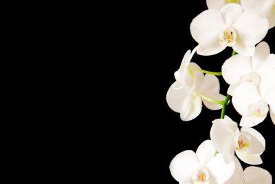 Adesivo White  Orchid Branch.