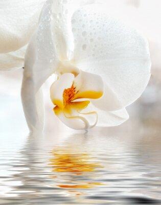 Adesivo White Orchid. Primo piano con la riflessione in acqua.