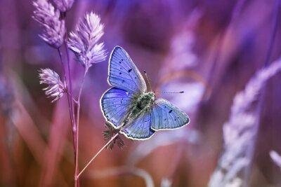 Adesivo маленькая бабочка среди травы в сиреневых тонах