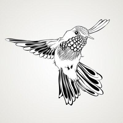 Carta da parati A mano volante disegnato colibrì stile vintage.