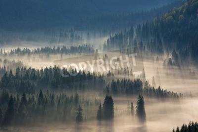 Carta da parati abeti su un prato lungo la volontà di bosco di conifere in montagne nebbiose