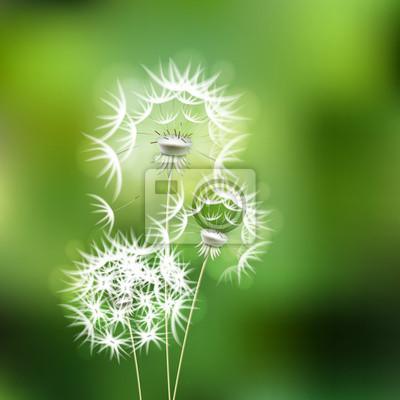 Abstract Sfondo Verde Con Fiore Di Tarassaco Carta Da Parati Carte