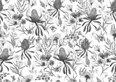 Carta da parati Acquerello modello tropicale, fiori, banksias arancio, rosa oleandro, fiori australiani esotici, fiori rossi Eroophila dichroantha. modello monocromo bianco e nero