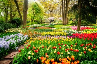 Carta da parati Aiole e percorso variopinti dei tulipani in un giardino convenzionale di primavera, retro tonificato