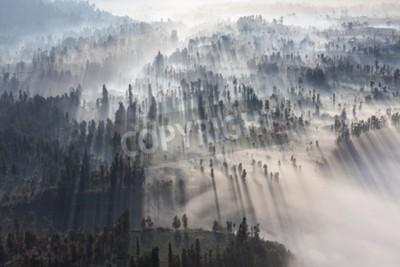Carta da parati Alba nella foresta vicino Bromo vulcano, isola di Java, Indonesia