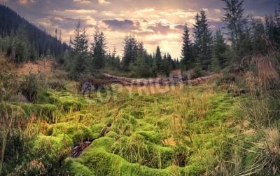 Carta da parati Alba variopinta di estate nella foresta magica con tappeto enorme di muschio verde