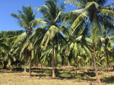 Carta da parati Alberi di cocco