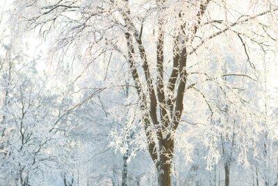 Carta da parati alberi sfondi con i rami degli alberi smerigliato su una giornata invernale
