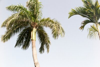Carta da parati Albero di cocco e cielo blu nella spiaggia di estate