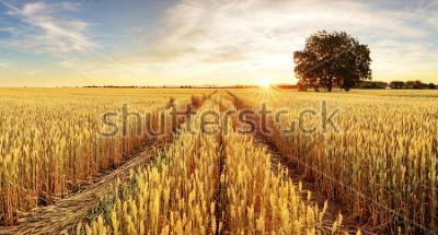 Carta da parati Albero e campo di grano