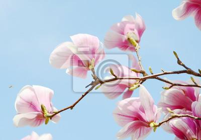 Carta da parati albero fiore di magnolia