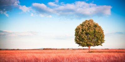 Carta da parati Albero isolato in un campo di grano toscana - (Toscana - Italia) - Tonica immagine con copia spazio
