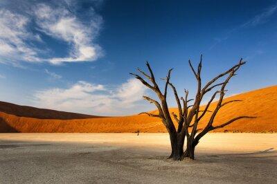 Carta da parati Albero morto in Sossusvlei, nel deserto del Namib, Namibia