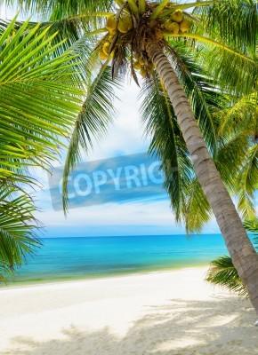 Carta da parati Albero verde su una spiaggia di sabbia bianca