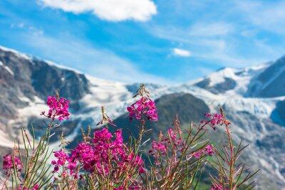 Carta da parati Alpi svizzere con fiori rosa selvatici