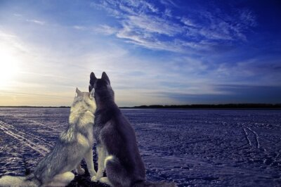 Carta da parati amanti - due cani si incontrano il tramonto