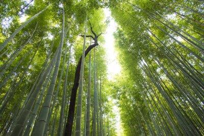 Carta da parati Arashiyama foresta di bambù a Kyoto in Giappone