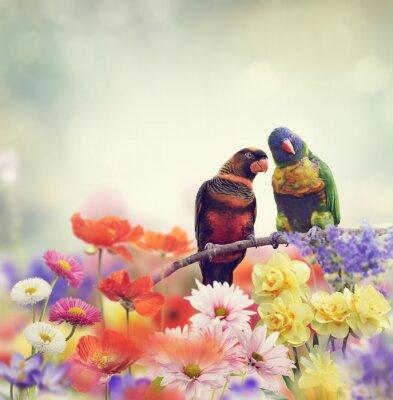 Carta da parati Arcobaleno pappagalli (Lorichetto arcobaleno)