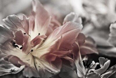 Carta da parati Arte di close-up tulipani, offuscata e taglienti