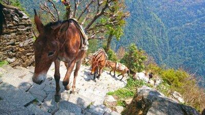 Carta da parati asini montagna in Nepal