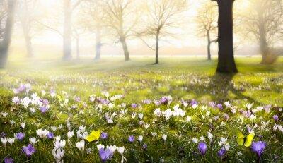 Carta da parati astratto soleggiata bellissimo sfondo di primavera