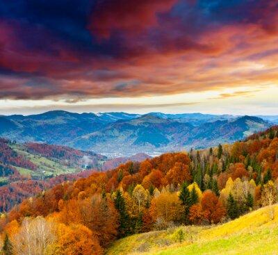 Carta da parati autunno