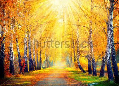 Carta da parati Autunno. Autunno. Parco autunnale. Autumn Trees and Leaves in raggi di sole. Bella scena autunnale