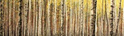 Carta da parati autunno betulla foresta paesaggio panorama