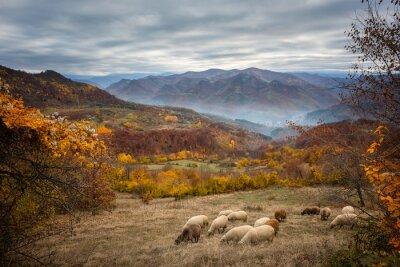 Carta da parati Autunno d'oro / Incredibile autunno vista di un prato di montagna nella centrale Monti Balcani, Bulgaria