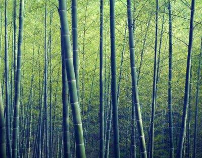 Carta da parati Bamboo Forest alberi Concetti