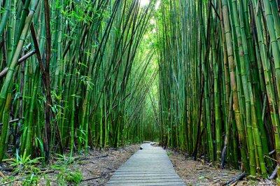 Carta da parati Bamboo Forrest