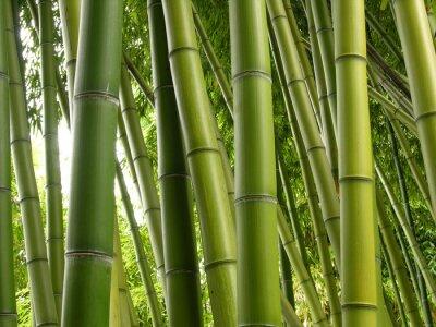 Carta da parati Bamboo Jungle
