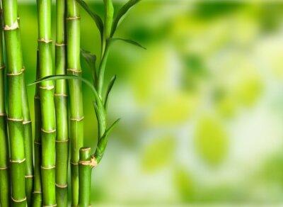 Carta da parati Bambù.