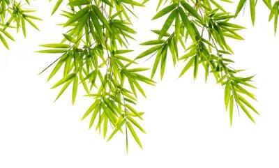 Carta da parati bambù lascia isolato su sfondo bianco