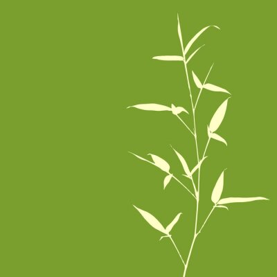 Carta da parati Bambù silhouette su sfondo verde