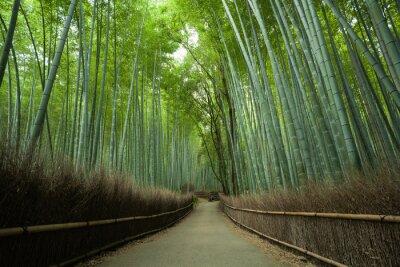 Carta da parati Bambù strada forestale, Kyoto, Giappone