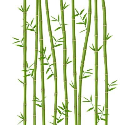 Carta da parati Bambù verde con foglie isolato su sfondo bianco