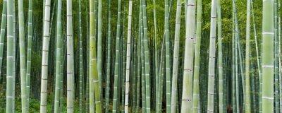Carta da parati Bambuseae