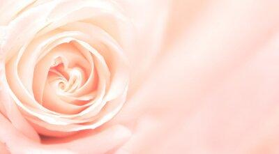 Carta da parati Banner con rose rosa