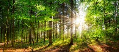 Carta da parati Beautiful rays of sunlight in a green forest