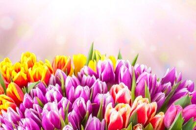 Carta da parati Beautiful tulip fiori