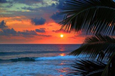 Carta da parati bel tramonto sul mare e foglie di palma