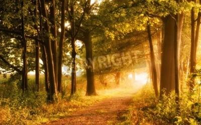 Carta da parati Bella autunno scena invita a una passeggiata su un sentiero nebbiosa nella foresta con fasci di luce solare