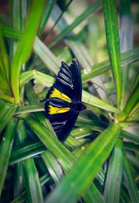 Carta da parati Bella farfalla si siede su una grande foglia