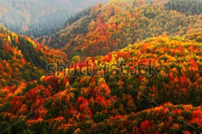 Carta da parati Bella foresta d'autunno arancione e rosso, molti alberi sulle colline arancioni, parco nazionale della Svizzera Boema, Repubblica ceca.